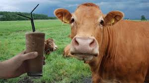 Brown Cows Make Chocolate Milk? | Absolute Insurance