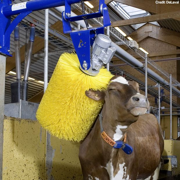 Farmers Auto Insurance >> Dairy Cows are just like Humans | Absolute Insurance Brokers