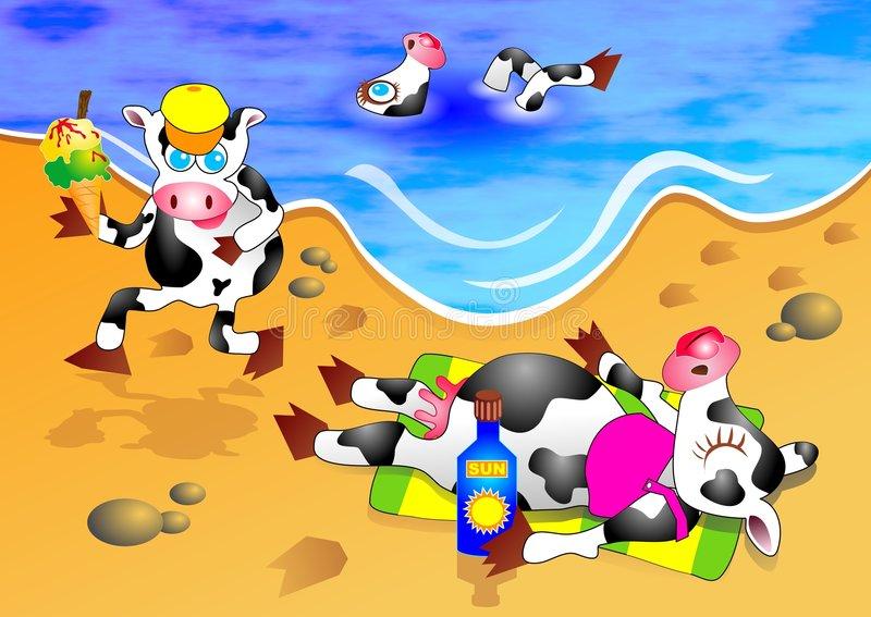 beach-cows-01953